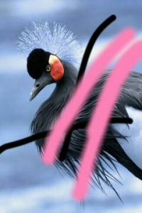 whisperingbird